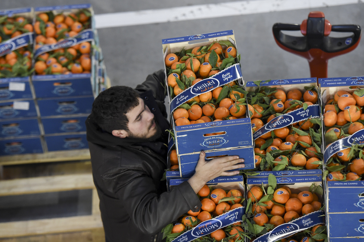 A worker moves crates of tangerines food packaging