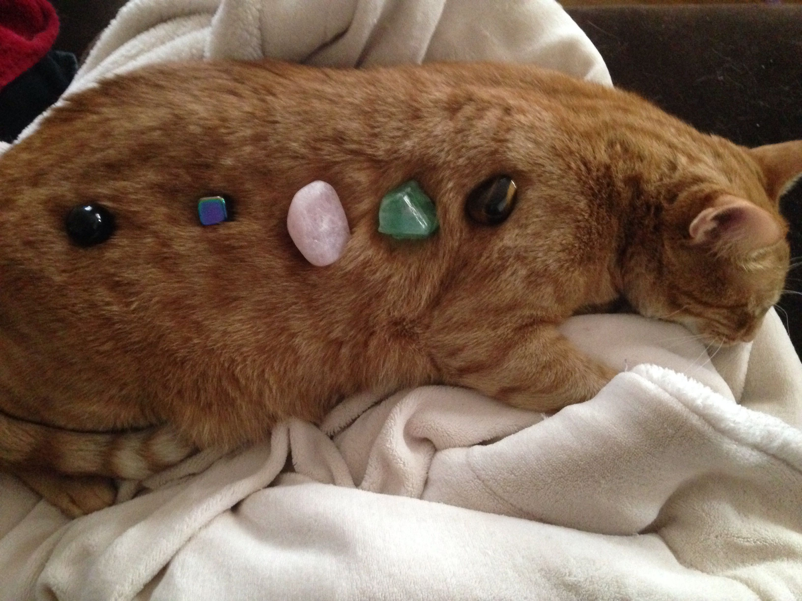 cat with crystals relaxing howlite lepidolite