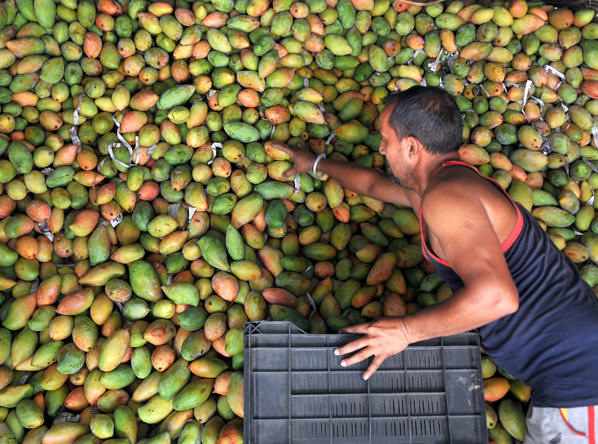 mangoes at a wholesale fruit market