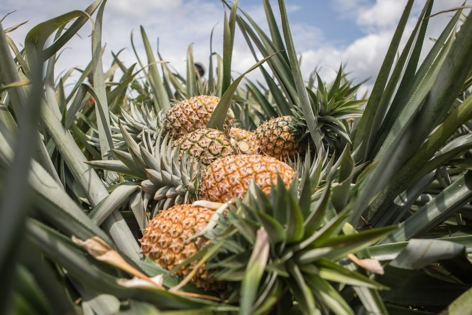Pineapples contain bromelain, which fights inflammation.