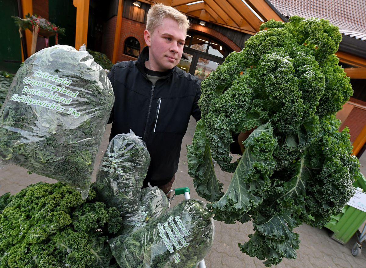 Freshly cut kale is exhibited for sale by Thore Buchholz