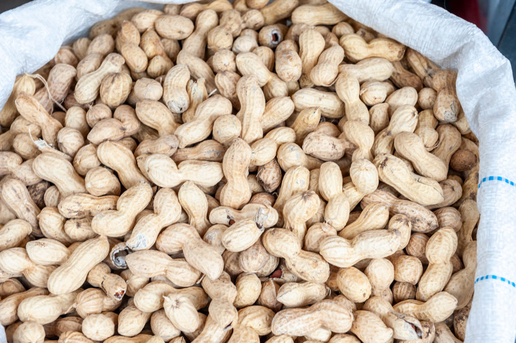 GettyImages-1140485009 jumbo raw peanuts in a sack