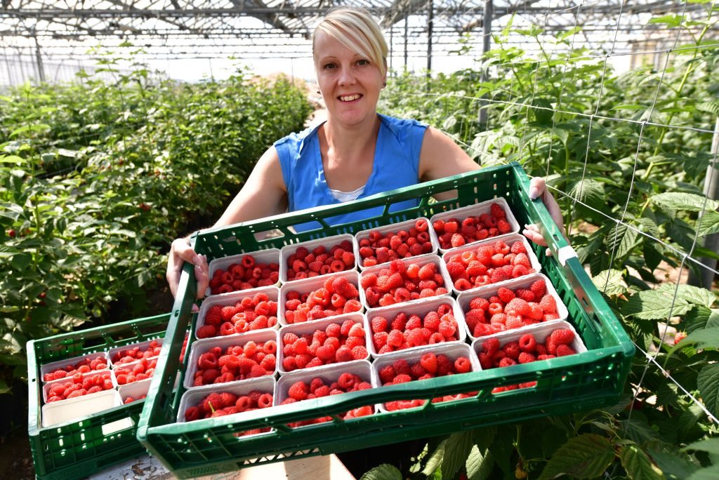 GettyImages-1153354518 woman holding freshly harvested raspberries