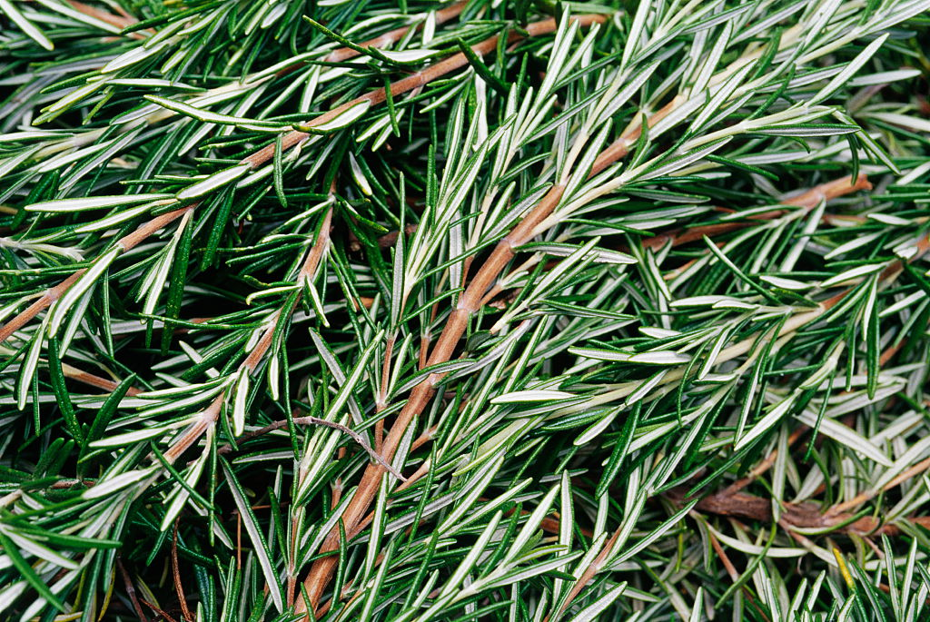 GettyImages-629377519 rosemary in a pile