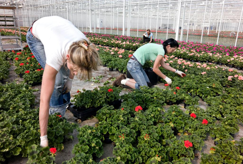 Houseplants help cool you down - 96850311