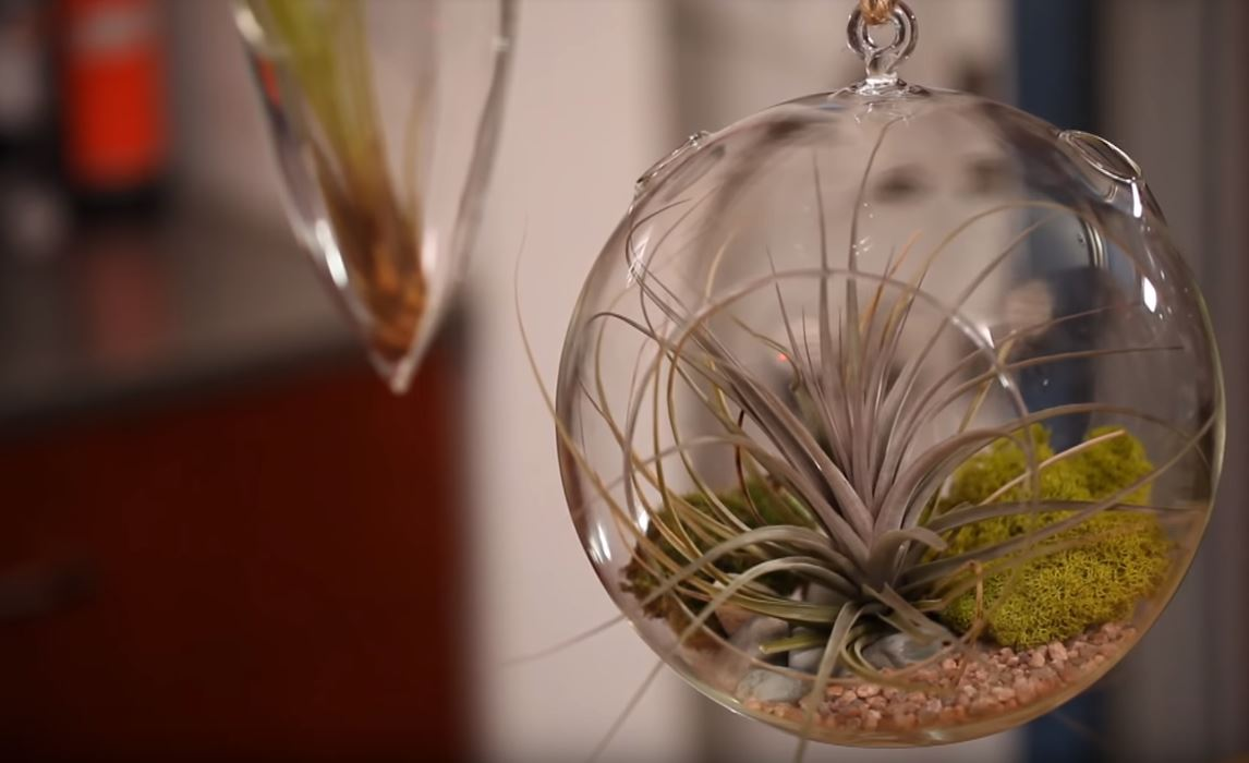 video guide on making air plant terrariums