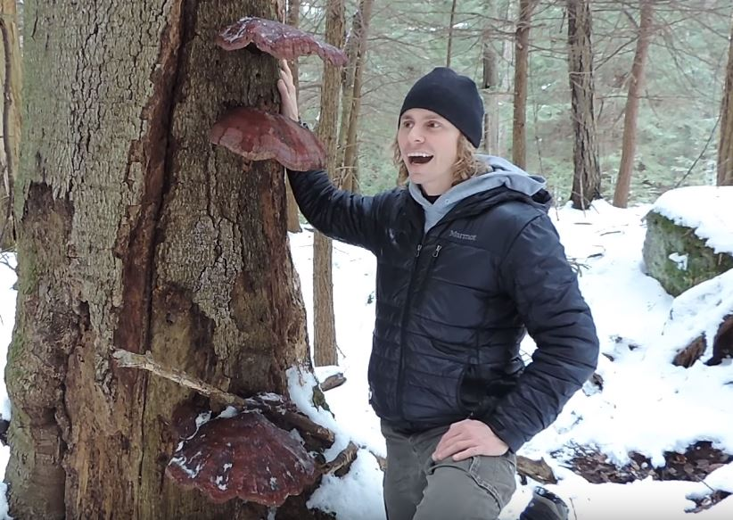 YouTuber found reishi mushrooms growing on a host tree