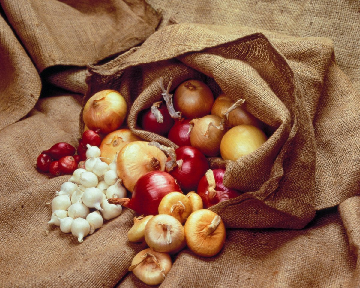 Onions In Burlap Bag