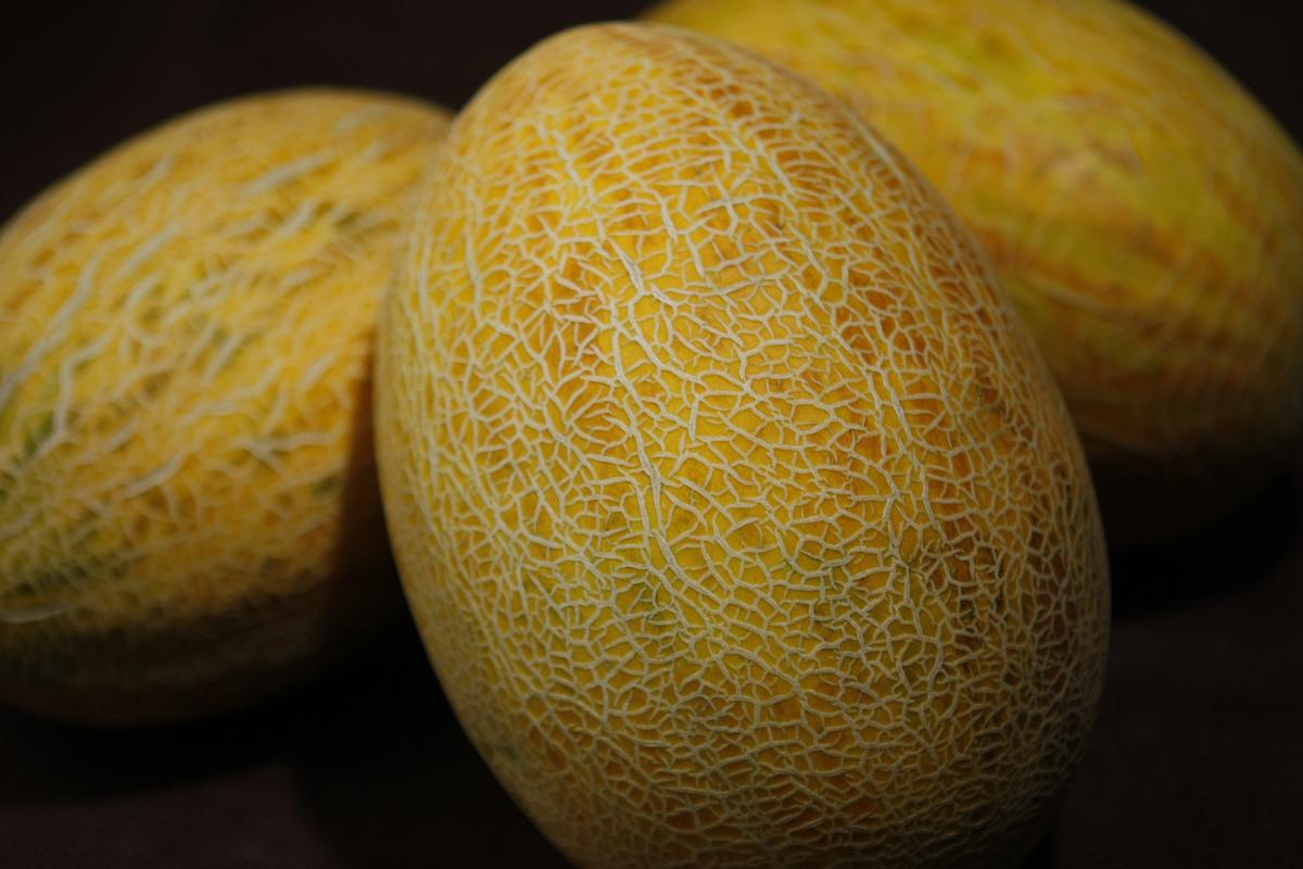Detail of Kharbuza crunchy Kondozi melons.