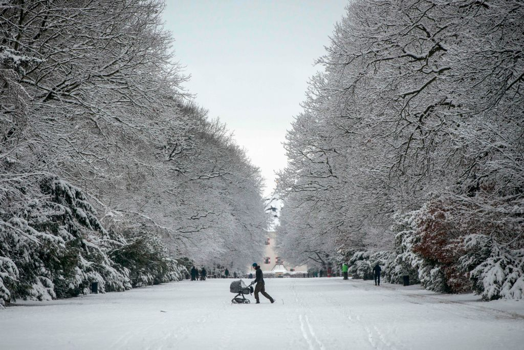 A stroller is pushed between rows of large, snow-covered trees