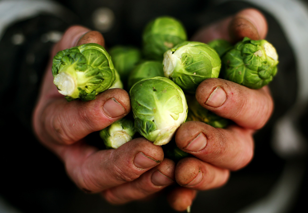 Brussels sprouts, grown on the Weldon family farm in Balheary, Co. Dublin, are being prepared for supermarkets to sell over Christmas.