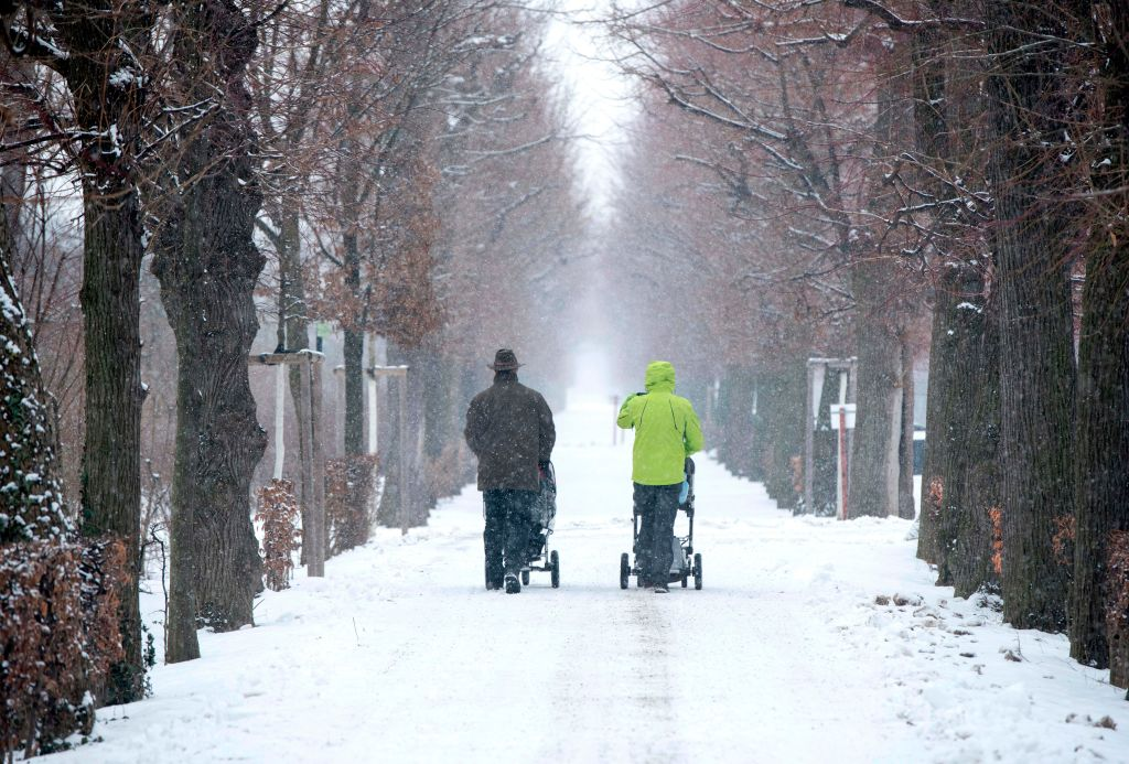 Two men are photographed from behind pushing strollers down a snow path