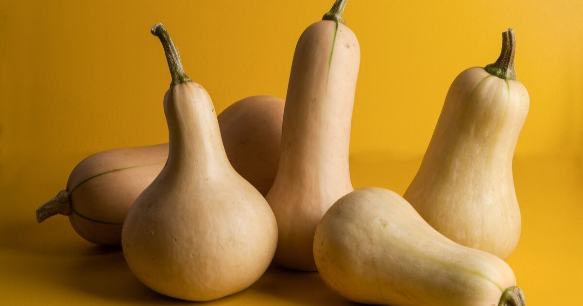 A variety of butternut squash