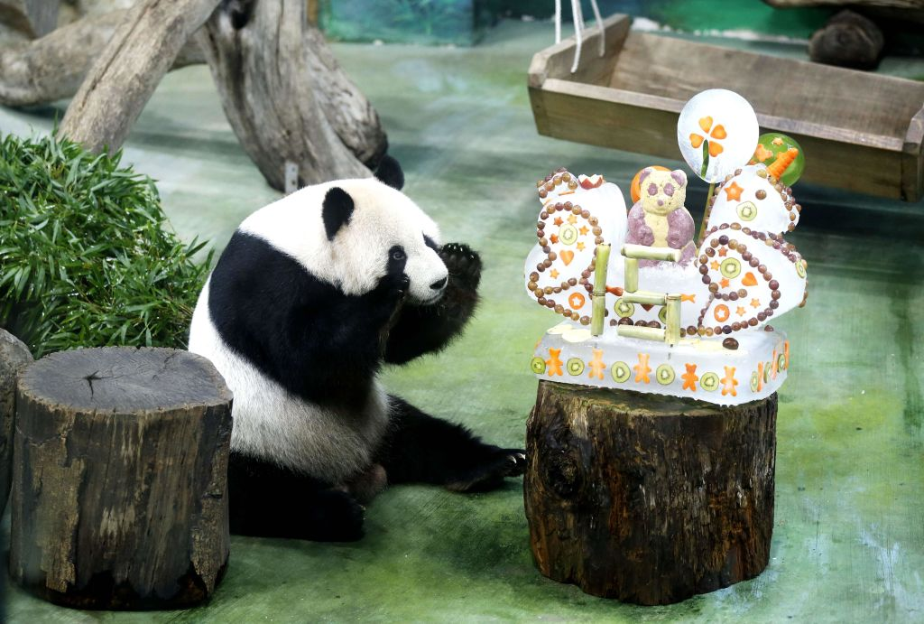 a panda bear with its birthday cake