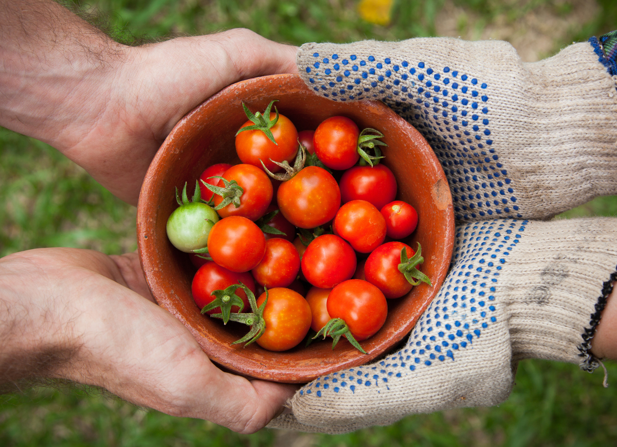 Two people hold a bowl of fresh tomatoes from a garden