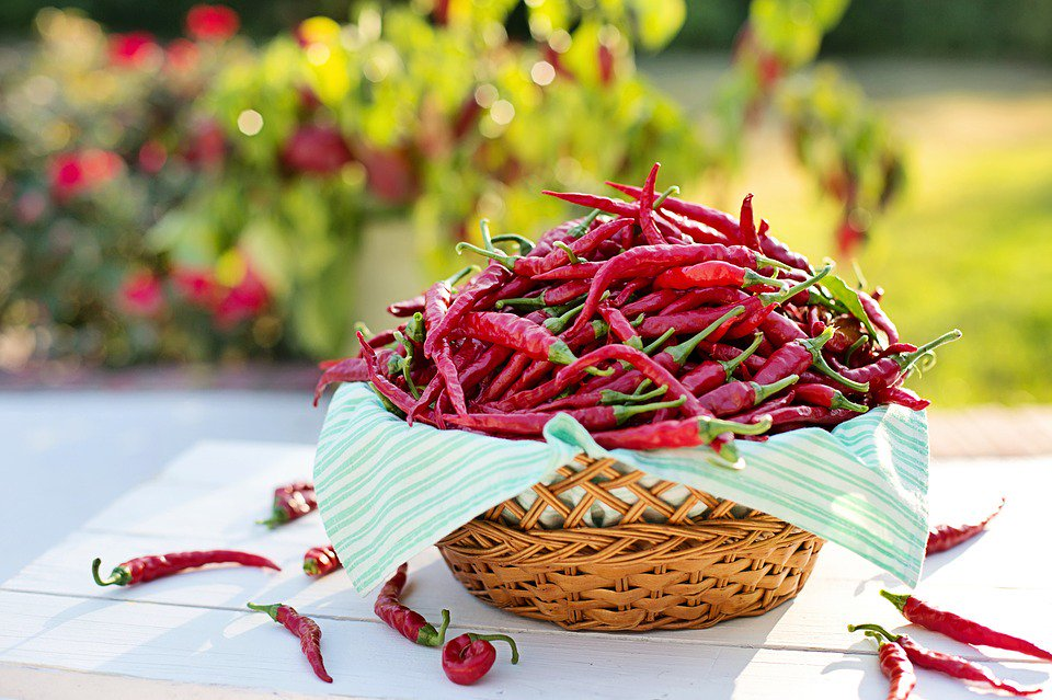 Red hot cayenne peppers in a basket outside