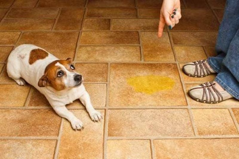 Keep Your Pet From Doing Their Business Inside