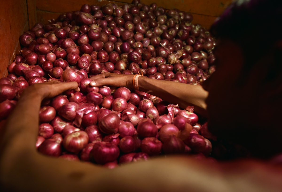 Woman gathers red onions from a wholesale onion market.
