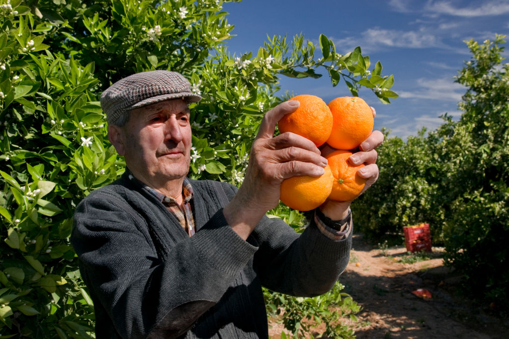 oranges in man's hands