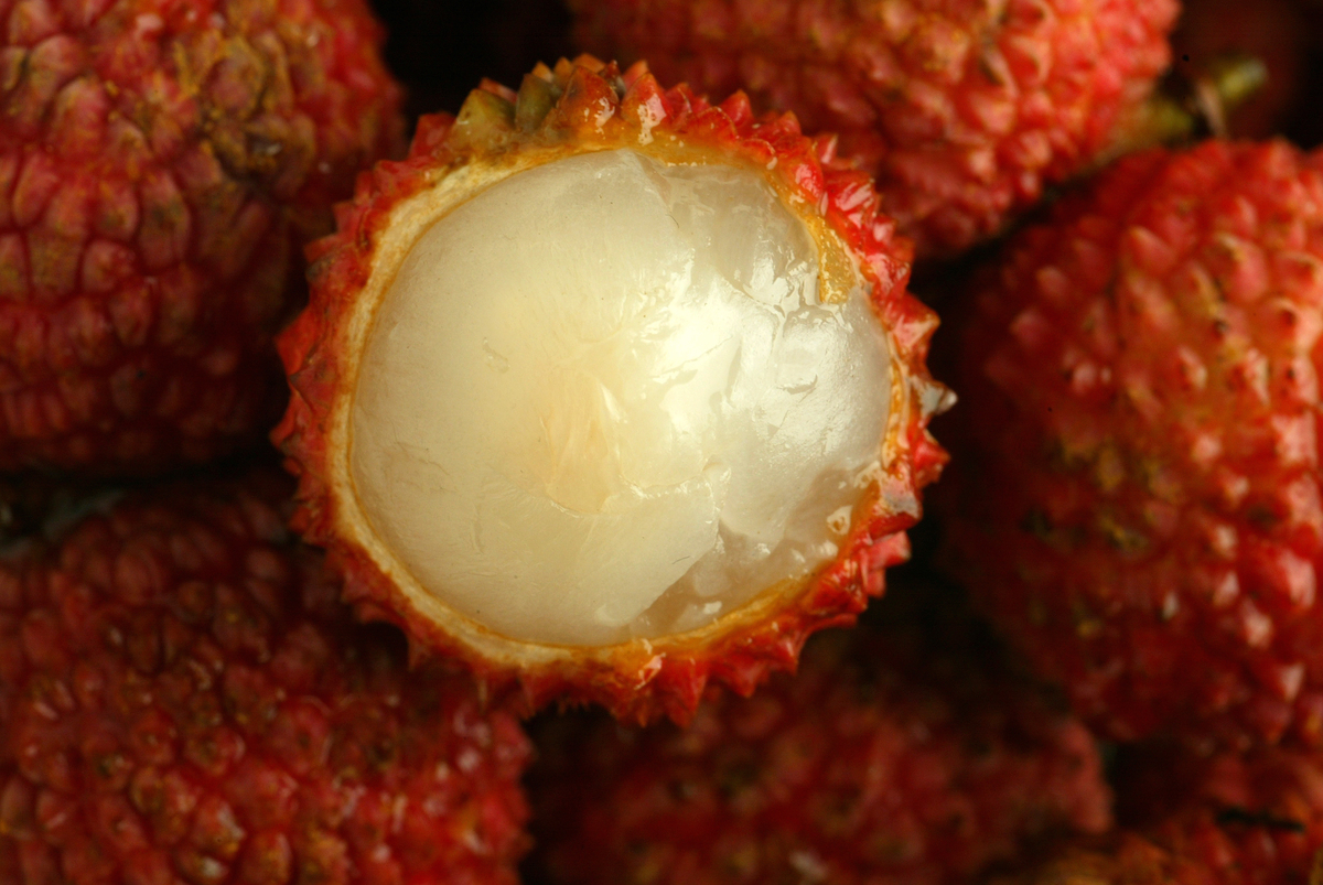One lychee fruit is slightly peeled.