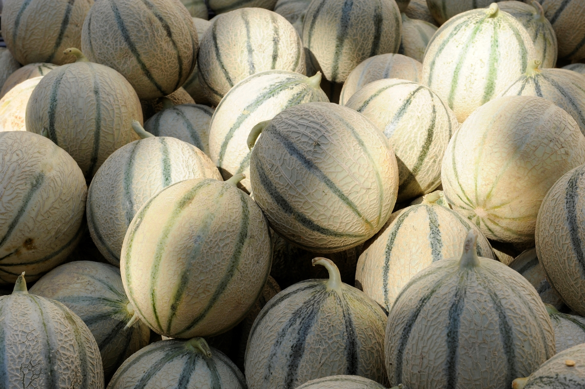 Whole cantaloupe melons are stacked at a supermarket in France.