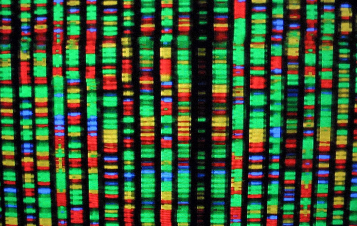 A digital representation of the human genome is shown in various colors