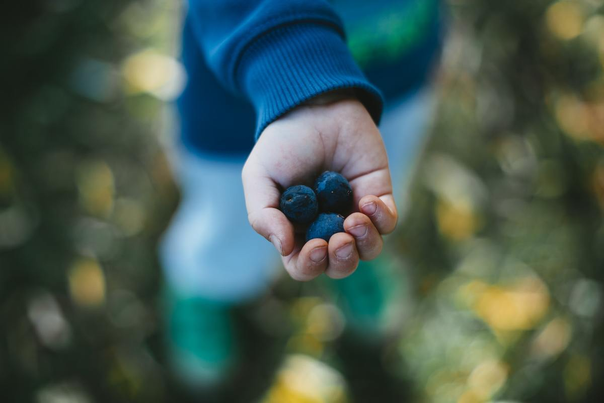 A child holds out three blueberries.