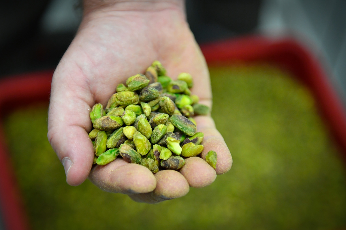 A person holds raw pistachios.