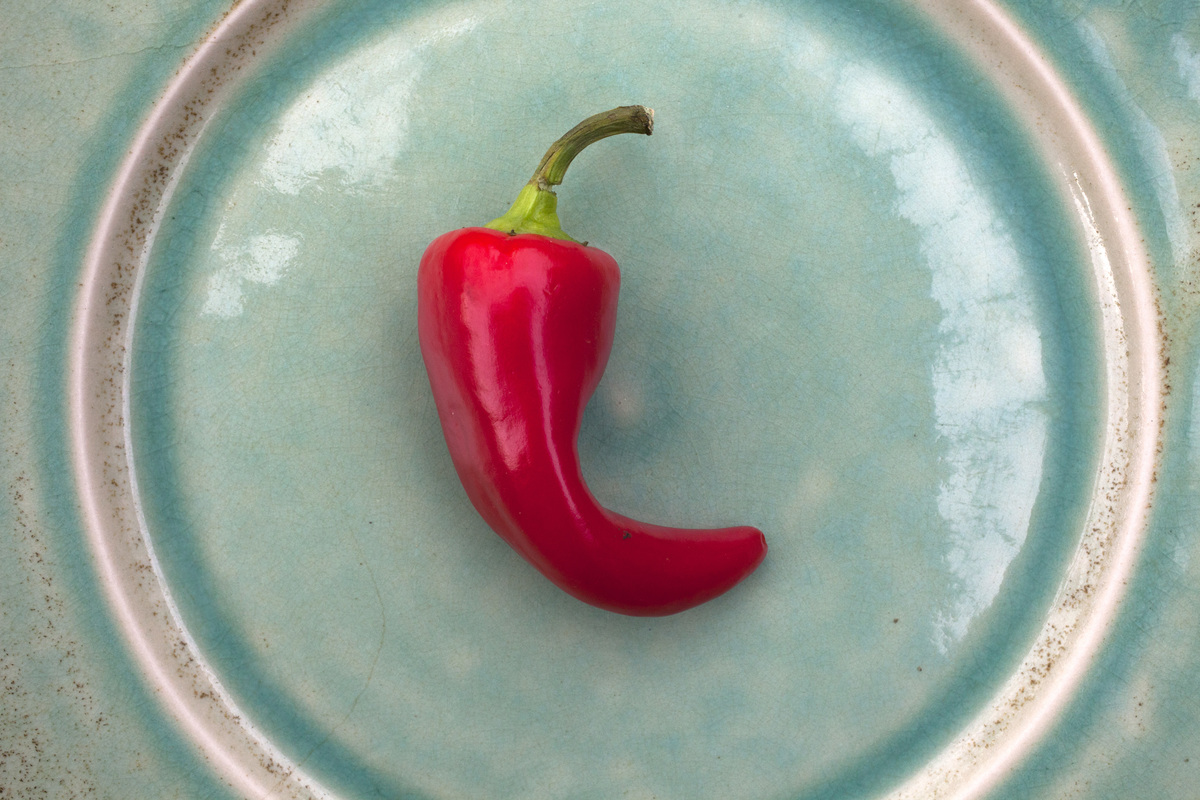 A cayenne pepper sits on a blue plate.