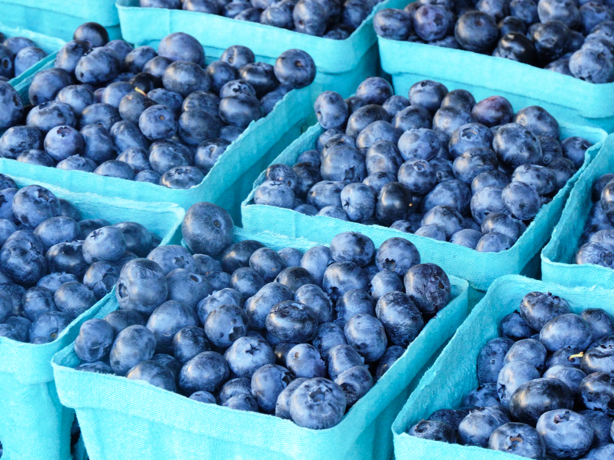 Containers hold blueberries at a farmer's market.