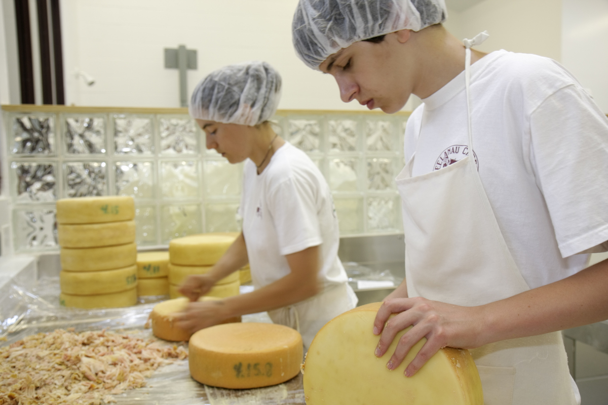 Workers carve cheese wheels.