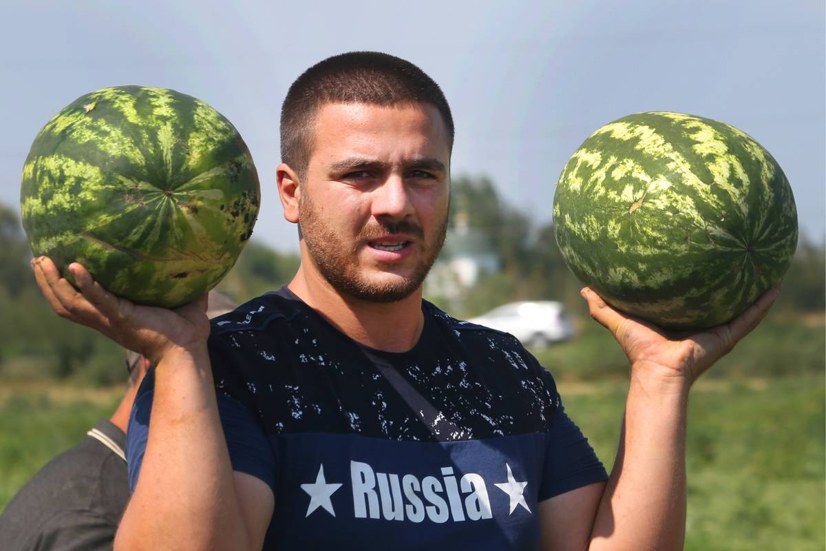 A Russian harvester holds up two watermelons.
