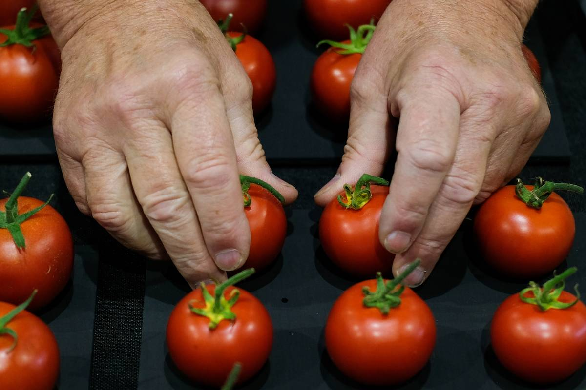 A person places tomatoes on a tray.