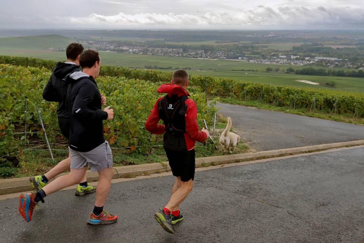 Men run with their dogs through Chardonnay vineyards.
