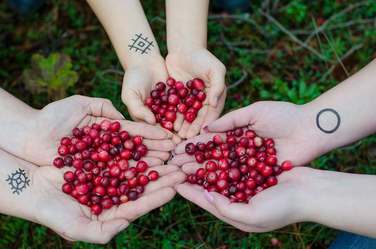 Three pairs of hands hold cranberries.