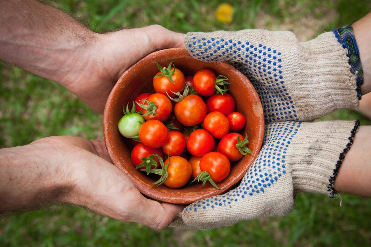 A gardener and her husband hold a bowl of tomatoes.