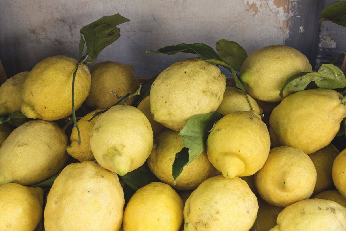 Fresh-picked lemons are in a pile.