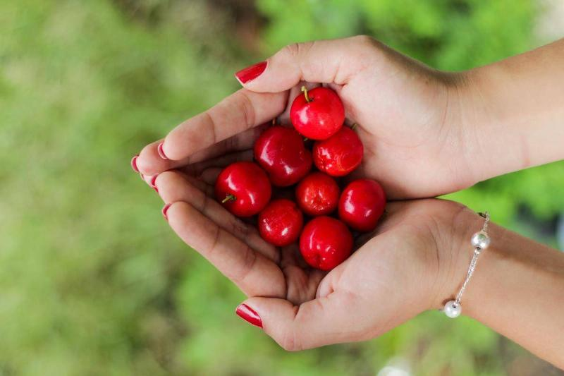 A woman holds fresh cherries.