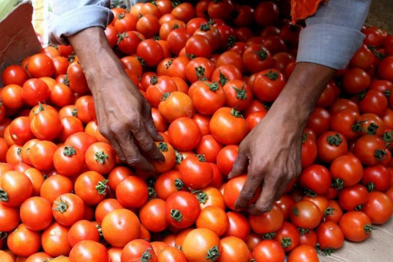 A tomato vendor arranges tomatoes.