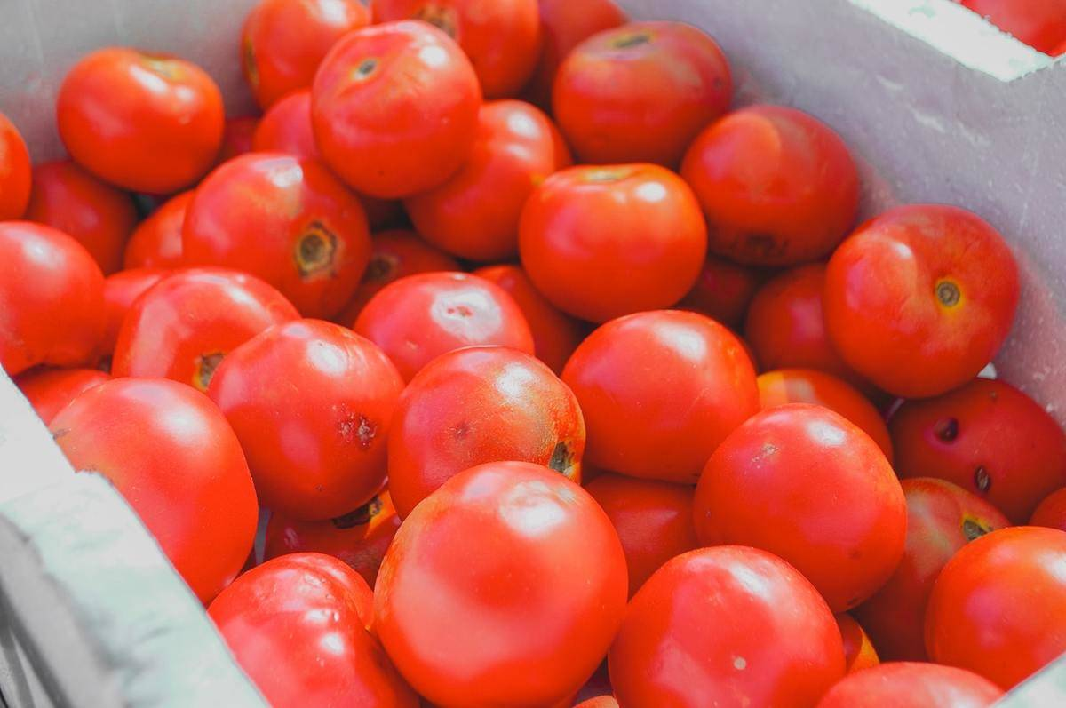 Tomatoes without stems are stacked in a container.