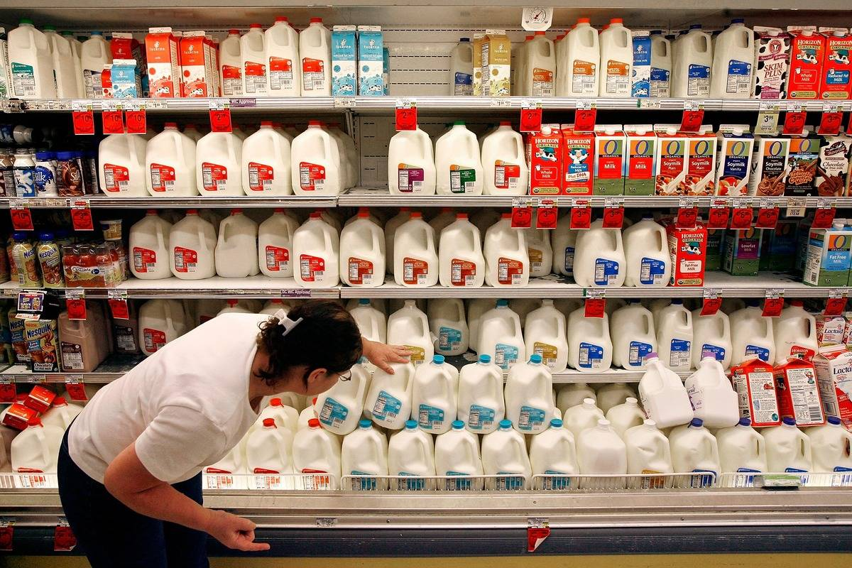 A grocery store customer scans the expiration date on gallons of milk sitting on a cooler shelf.