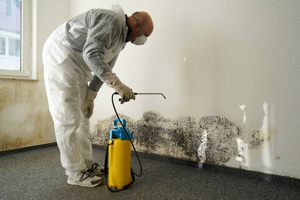 cleaning-mold-51100