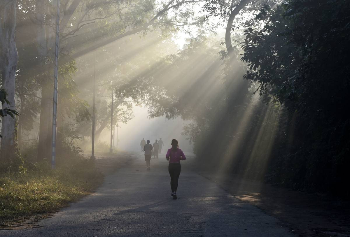 Rays of sunlight spill through the trees on joggers running.