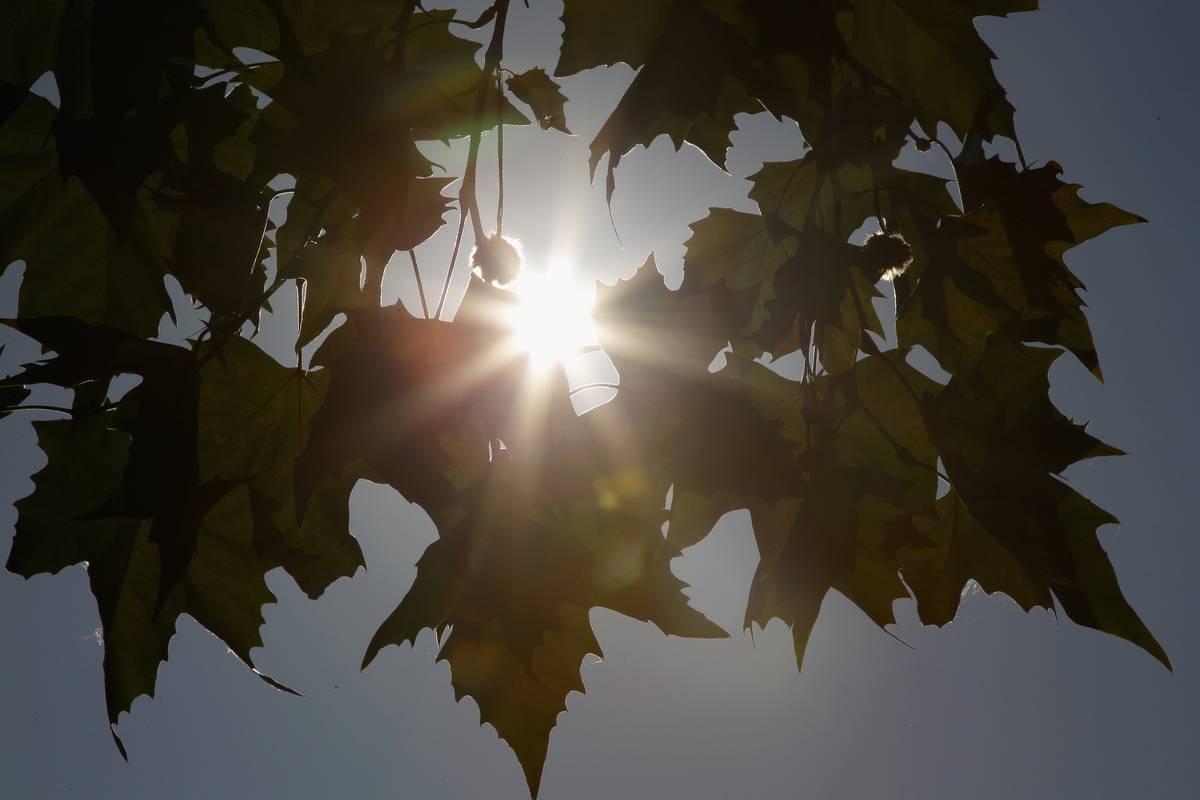 The sun shines through tree leaves.