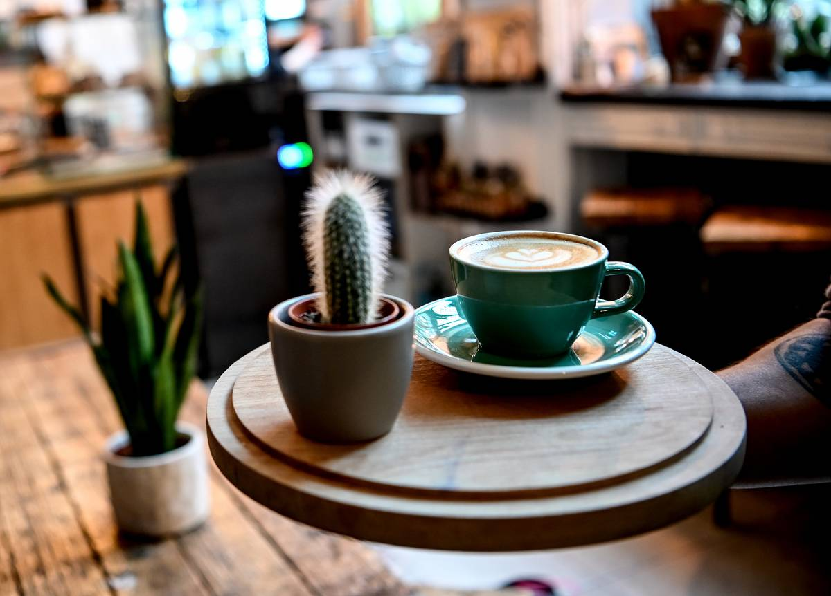 House plants are placed next to coffee at a cafe.