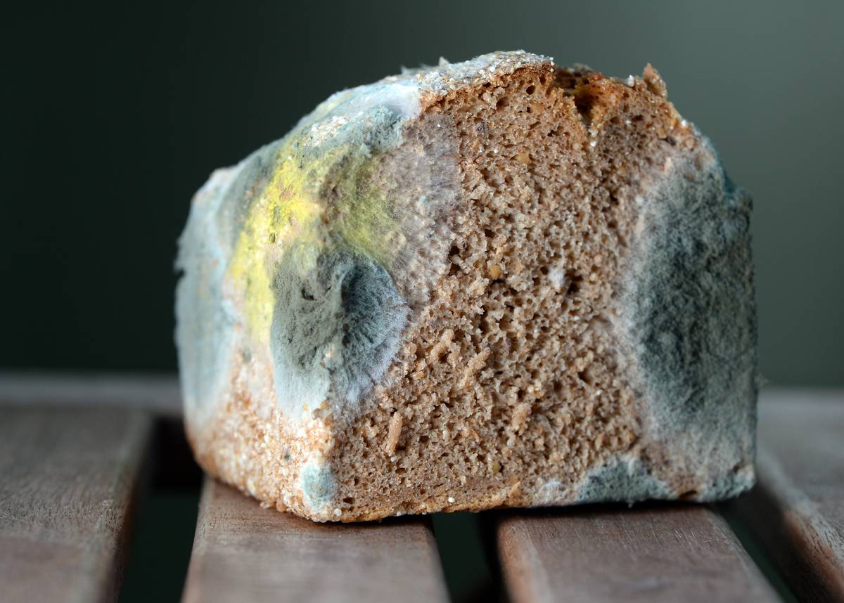Corners of a bread loaf are covered in mold.