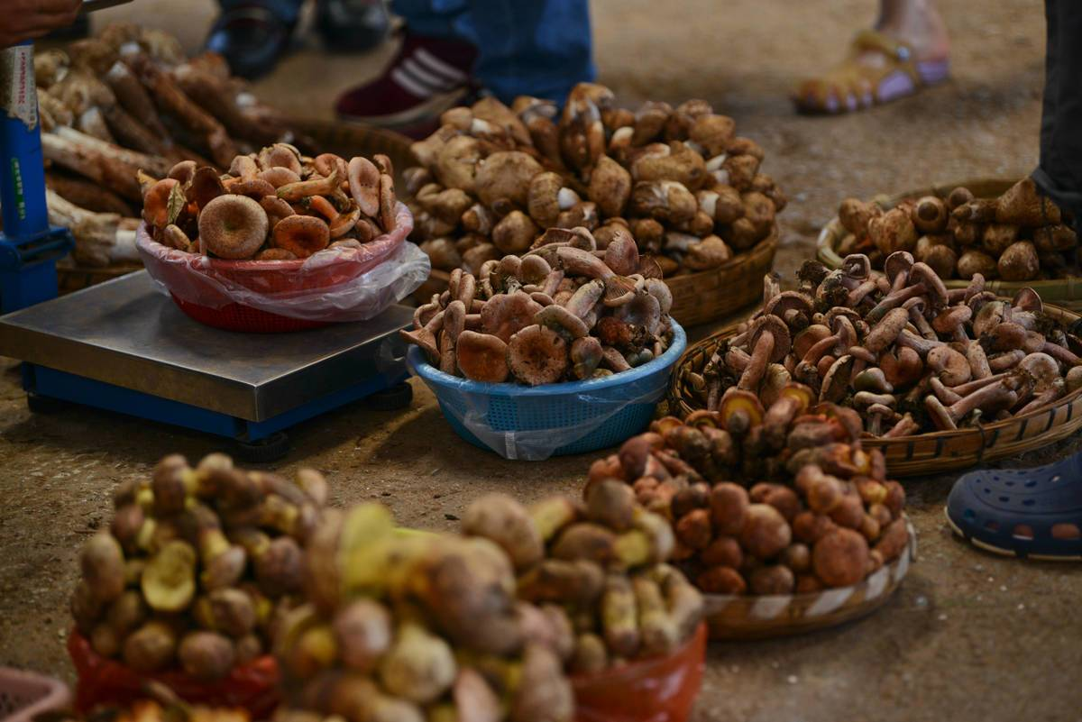 People trade wild mushrooms in a Chinese market.