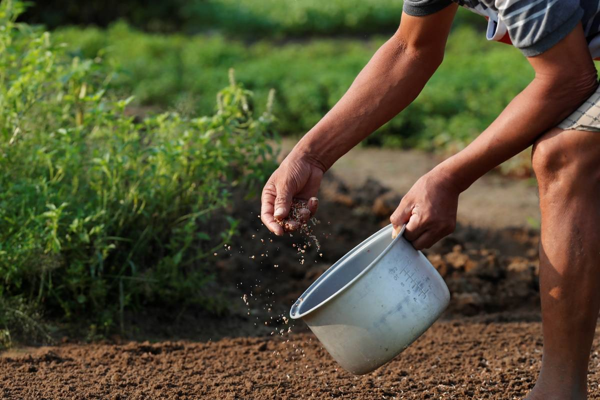 Space Out Tiny Seeds In Your Garden