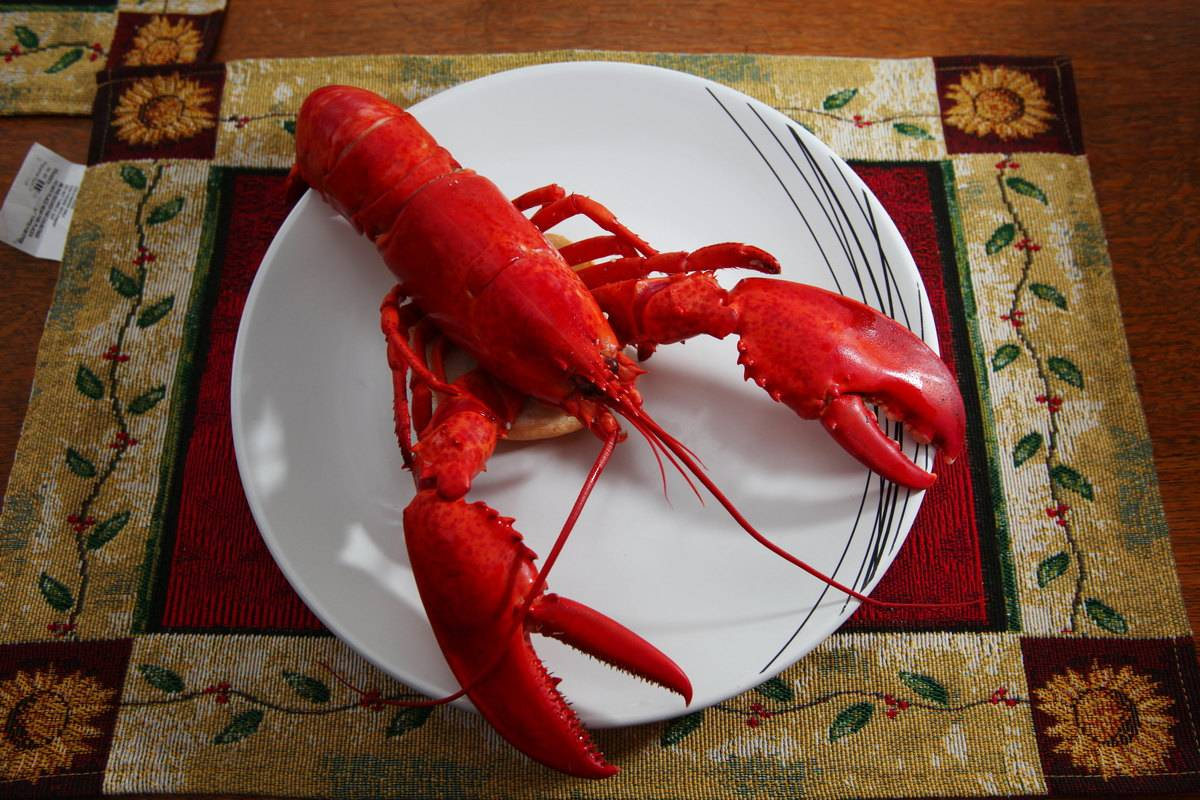 A cooked lobster sits on a plate in a Canadian restaurant.