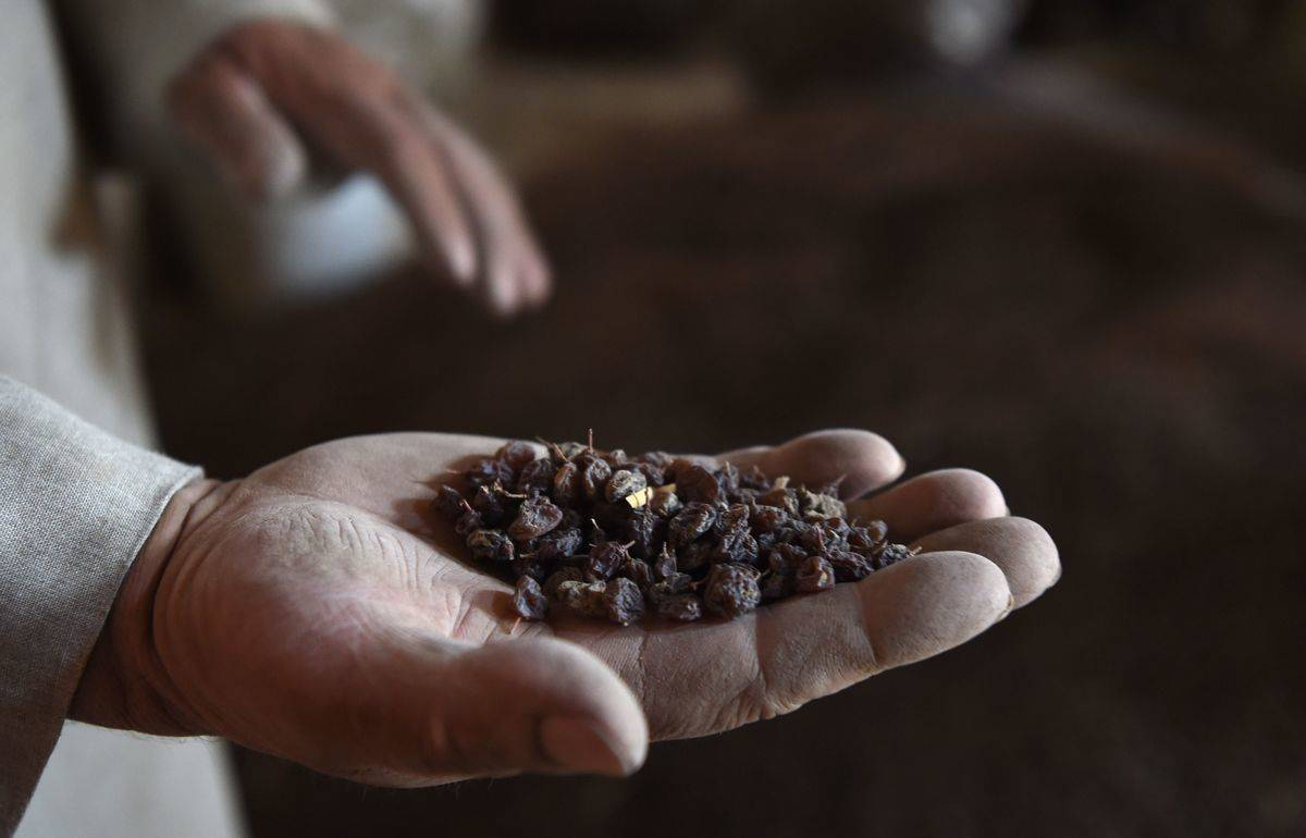 A man holds raisins in the palm of his hand.